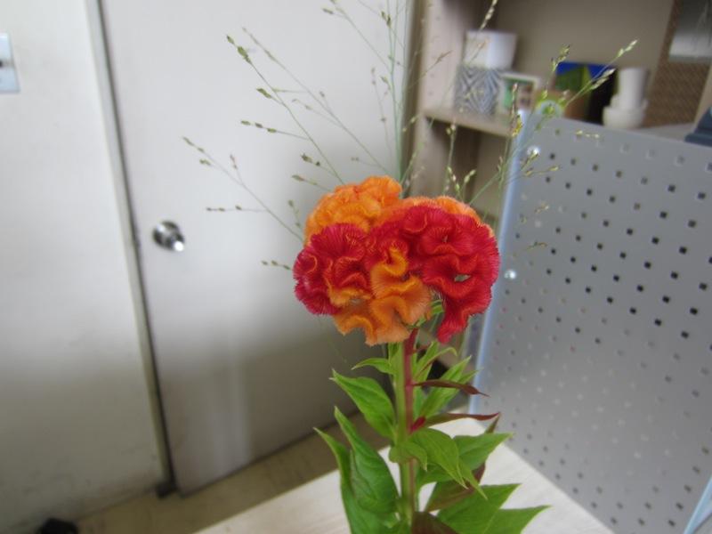 Blog289